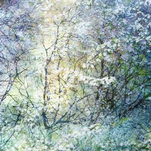 Floral Froth II by Doug Chinnery