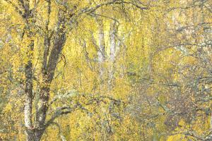 Golden Dreams by Doug Chinnery