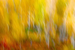 In Golden Dreams by Doug Chinnery