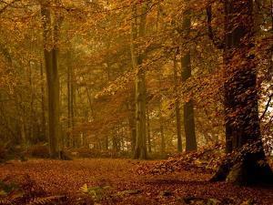 It's Raining Leaves IIi by Doug Chinnery