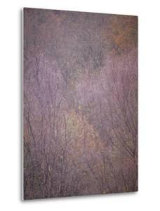Lavendar Trees by Doug Chinnery