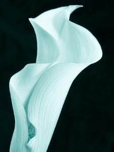 Lily 9 by Doug Chinnery