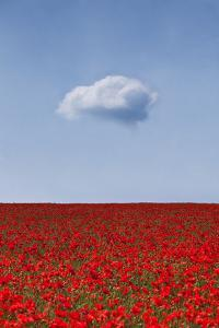 Lone Cloud over Poppy Field by Doug Chinnery