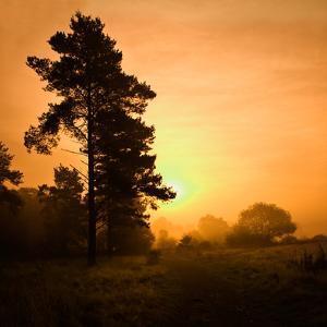 Morning Glory by Doug Chinnery