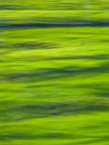 Oh So Green by Doug Chinnery