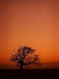 Orange Tree by Doug Chinnery