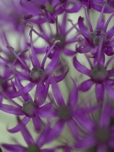 Purple Haze 1 by Doug Chinnery