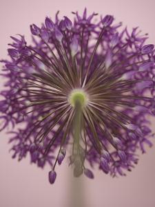 Purple Haze 3 by Doug Chinnery