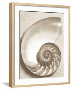 Sea Shell by Doug Chinnery