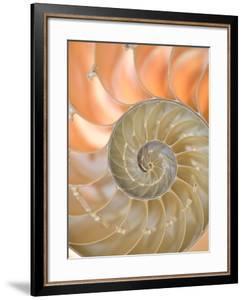 Shells 4 by Doug Chinnery