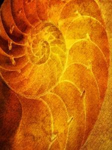 Shells 6 by Doug Chinnery