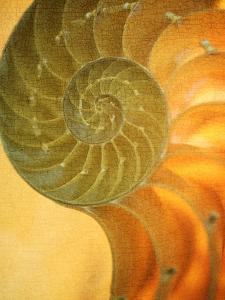 Shells 7 by Doug Chinnery