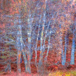 The Fire Forest by Doug Chinnery