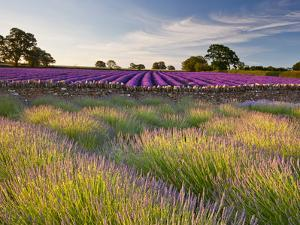 The Scent of Summer by Doug Chinnery