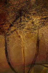 The Trees of Life II by Doug Chinnery