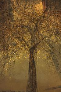 The Trees of Life VI by Doug Chinnery