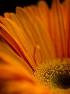 Vibrant Orange by Doug Chinnery