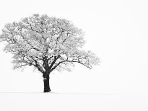 Waiting for Spring by Doug Chinnery