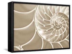 White Swirls by Doug Chinnery