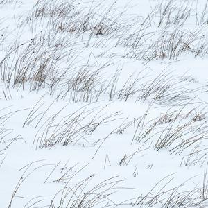 Winter Haiku by Doug Chinnery