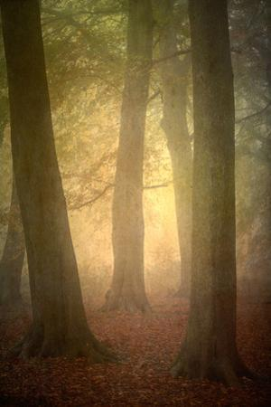 Woodland Dawn by Doug Chinnery