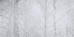 Woodland Winter by Doug Chinnery