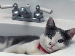 Cat Lying in a Sink by Doug Mazell