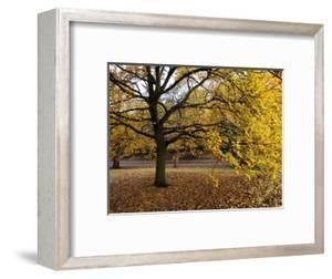 Autumn in Greenwich Park by Doug McKinlay