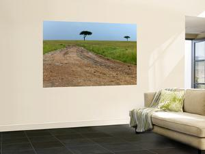 Dirt Road and Acacia Trees in Reserve by Doug McKinlay