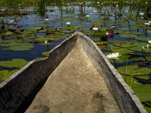 Mokoro, Traditional Dugout Canoe, Among Lilies on Delta by Doug McKinlay