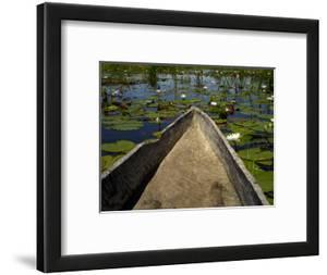 Mokoro, Traditional Dugout Canoe, Among Lilies on Delta by Doug McKinlay