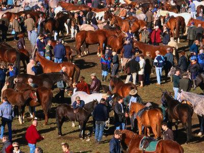 The Masses Gather for the Ballinasloe Horse Fair, Ballinasloe, Ireland