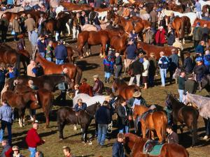 The Masses Gather for the Ballinasloe Horse Fair, Ballinasloe, Ireland by Doug McKinlay