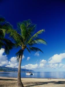 Beach and Palm Tree, Maui, Hawaii by Doug Page