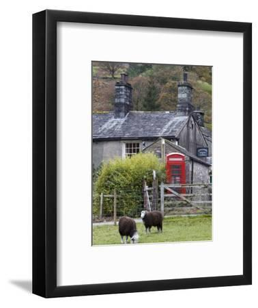 Herdwick Sheep and Cottage, Borrowdale, Lake District, Cumbria, England