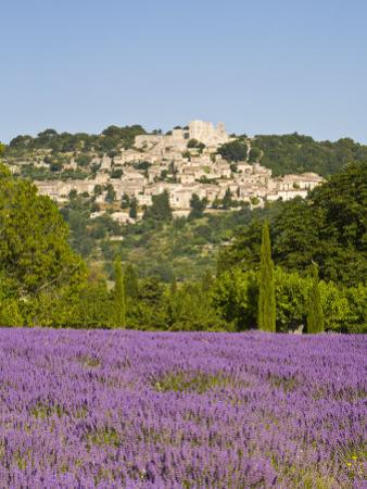 Lacoste and Lavender Fields, Luberon, Vaucluse Provence, France