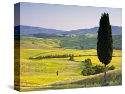 Landscale Near Pienza, Val D' Orcia, Tuscany, Italy