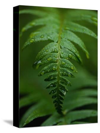 Fern Leaf by Doug Wilson
