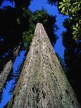 Fern Leaf-Doug Wilson-Photographic Print