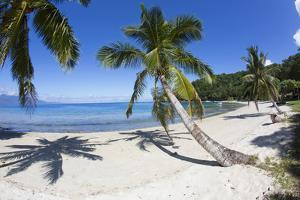 Beach, Waitatavi Bay, Vanua Levu, Fiji by Douglas Peebles