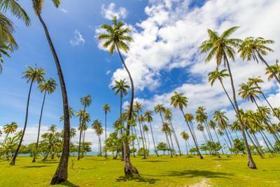 Coconut Grove, Temae, Moorea, French Polynesia by Douglas Peebles