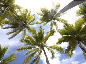 Coconut Palm Trees by Douglas Peebles