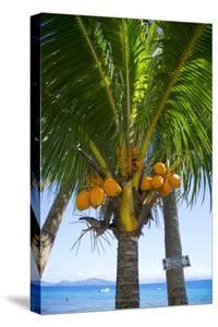 Falling Coconut Sign, Taveuni, Fiji by Douglas Peebles