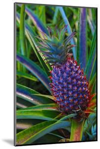 Pineapple, Melanesia, Fiji by Douglas Peebles