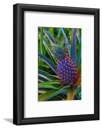 Pineapple, Melanesia, Fiji