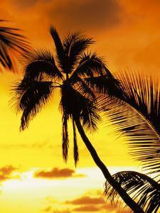 Sunset and Palm Tree by Douglas Peebles