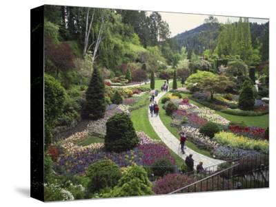 Tulips, Butchart Gardens, Victoria, British Columbia, Canada