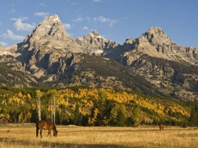 Horses and the Teton Range by Douglas Steakley