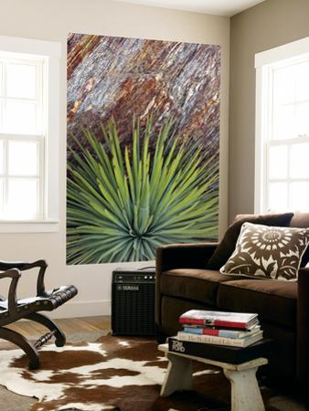 Yucca and Stone by Douglas Steakley
