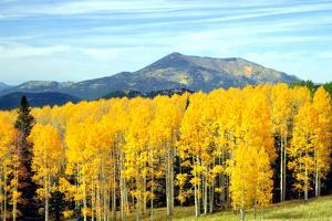 Aspens of Autumn I by Douglas Taylor